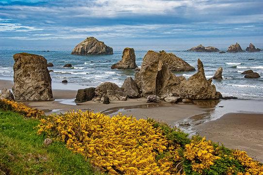 Beachscene with flowers, rocks and ocean.