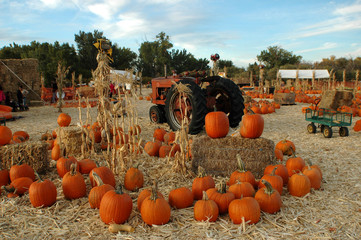 Pumpkin Patch on a fall day