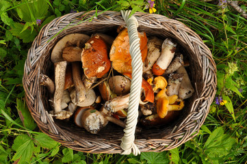 Basket of mushrooms in a forest glade close-up