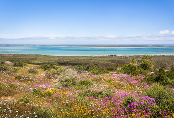 View of pink and white wild flowers with ocean in background