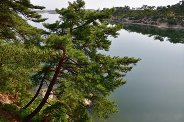 North Korean scenery. Red korean pine forest