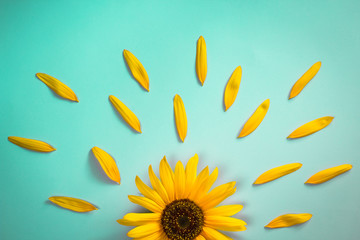 Creative layout made of sunflower and petals on bright blue background. Flat lay Fototapete