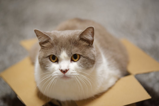 Close up of a cat in small cardboard box looking at camera