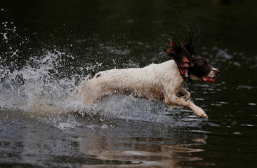 A dog runs through flood water in the Sale area of Manchester, Britain
