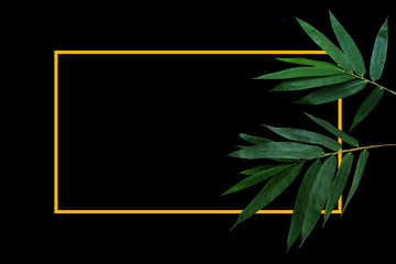 Wall Mural - Dark green leaves of bamboo forest plant on black background with gold yellow border frame layout.