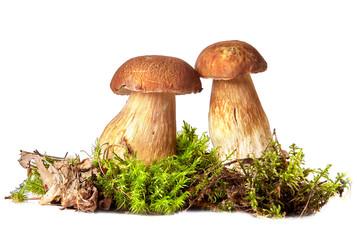 Obraz Boletus. Mushrooms and moss. Boletus on a white background. - fototapety do salonu