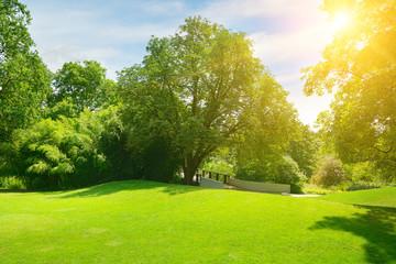 Bright sun in green summer park.