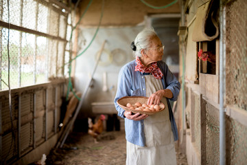 Senior woman collecting eggs in basket from chicken coop