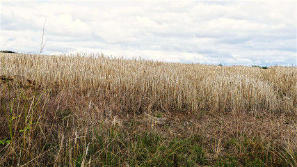 View over arable land just after being cut