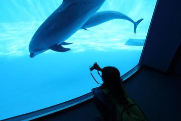 観光客とイルカ