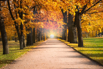 Photo Stands Melon Gloden Autumn season with Beautiful romantic alley in a park with colorful trees and sunlight. autumn natural background