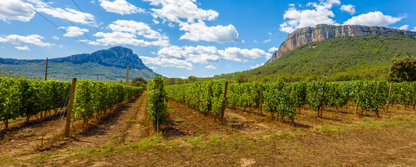 Wall Murals Vineyard vineyard in the mountains, Pic Saint-Loup, Hérault, France