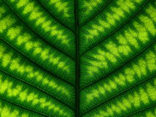 Wall Mural - lush green leaf tetxure