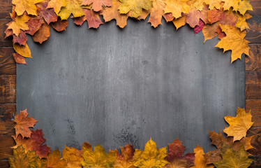 Wall Mural - Seasonal autumn background. Frame of colorful maple leaves.