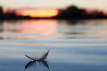 A Feather on the lake