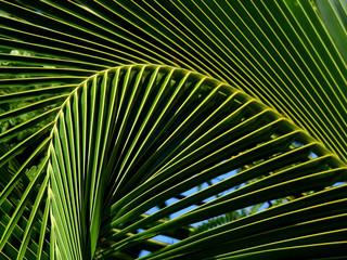 Wall Mural - green coconut leaf