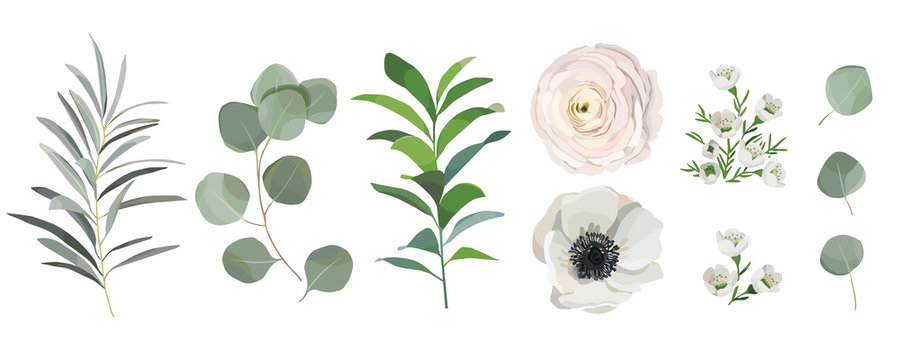 set of watercolor leaves, anemone ranunculus flowers, eucalyptus branches. Design elements for patterns, wreath, laurels and compositions, greeting cards, wedding invitations. floral design concept
