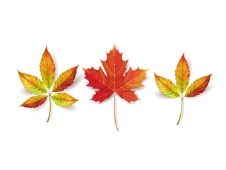 Autumn leaves isolated on white background. Vector illustration.