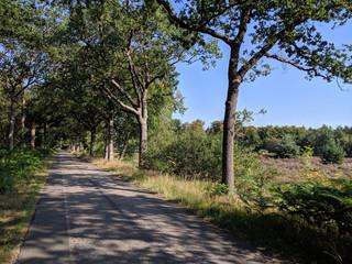 Road around Brongerga in Friesland