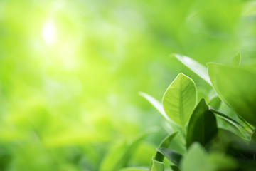 Photo sur Aluminium Spa Closeup beautiful view of nature green leaf on greenery blurred background with sunlight and copy space. It is use for natural ecology summer background and fresh wallpaper concept.