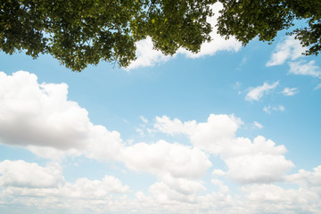 Branches on a blue sky in background with white clouds