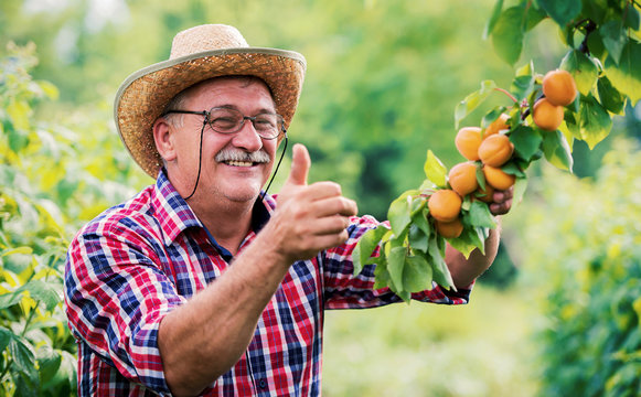 Orcharding. Happy farmer standing in the orchard and showing thumb up. Hobbies and leisure, agricultural concept