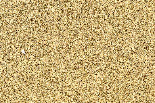 Sabbia e orme