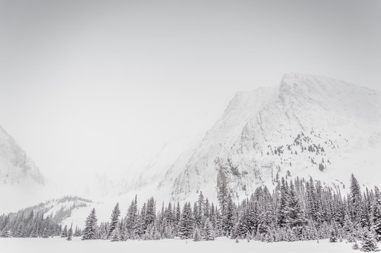 Snowy trees at the bottom of a rocky mountain face during a snow storm