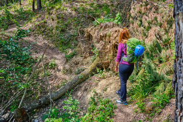 Woman hiker with backpack and alpine helmet, on a mountain trail, with a huge pine tree torn over by storm, forming a big obstacle to step over.