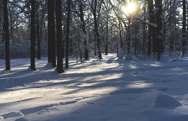 Snow-covered Park on a clear day at sunset.