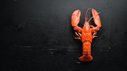 Boiled lobster on black background. Top view. Free copy space. Wall mural