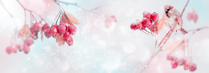 Winter tender magic forest tale. Red bright berries and sparrow in a snowy park. Winter and autumn concept. Free space for text. Wide format.