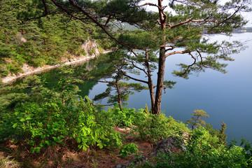 North Korean scenery. Red korean pine tree. Lake Samilpo