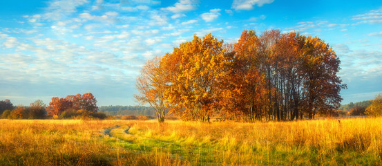 Fond de hotte en verre imprimé Piscine Beautiful panoramic autumn nature landscape. Sunny morning on autumnal meadow. Scenic autumn. Scenery of golden trees on grassy field