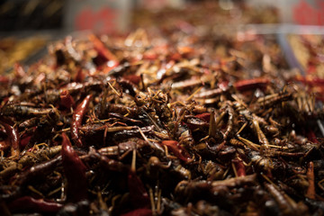 Eating an assortment of insects in Nanning China