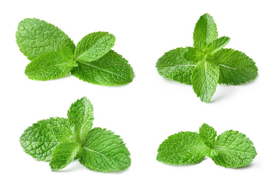 Collection of fresh mint leaves, isolated on white background