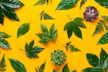 Green plant on the yellow background. Retro vintage style.
