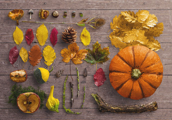 Fall Scene Creator with Natural Elements