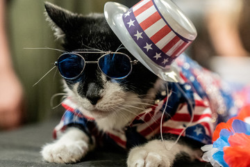 Balboo wears a patriotic flag hat at backstage before the Algonquin Hotel's Annual Cat Fashion Show in the Manhattan borough of New York City
