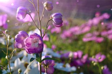 Wall Mural - Sommer Blumen Wiese - Grußkarte Blumenwiese