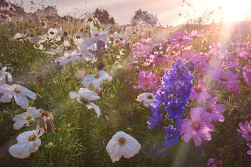 Wall Mural - Blumen Feld im Sommer - Blumenwiese Sommer Hintergrund