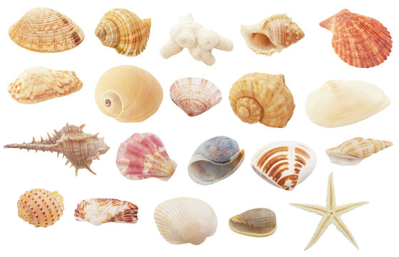 Different seashells, coral and starfish  isolated on white background