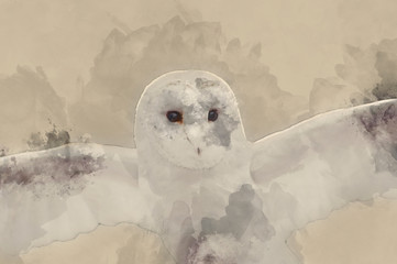 Fototapete - Digital watercolour painting of Barn owl bird of prey