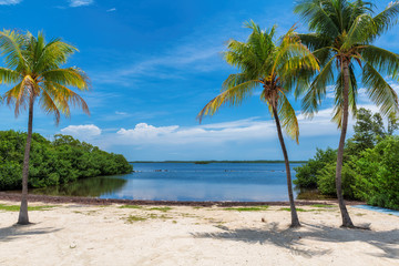 Wall Mural - Coco palms on Sunny beach and Caribbean sea in Key, Largo, Florida.