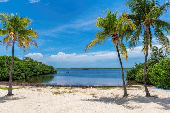 Coco palms on Sunny beach and Caribbean sea in Key, Largo, Florida.