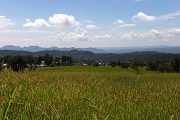 Fotobehang Rijstvelden Countryside