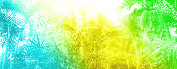 Tropical palm leaves with sun leaks effect. Floral pattern in trendy rainbow gradient background....
