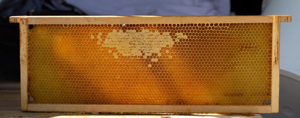Honigwabe komplett