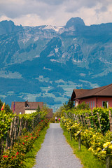 Liechtenstein vineyard and mountains landscape