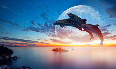 Tuinposter Dolfijn Silhoutte of beautiful dolphin jumping up from the sea at sunset with super moon